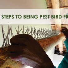 10 Steps To Being Pest Bird Free