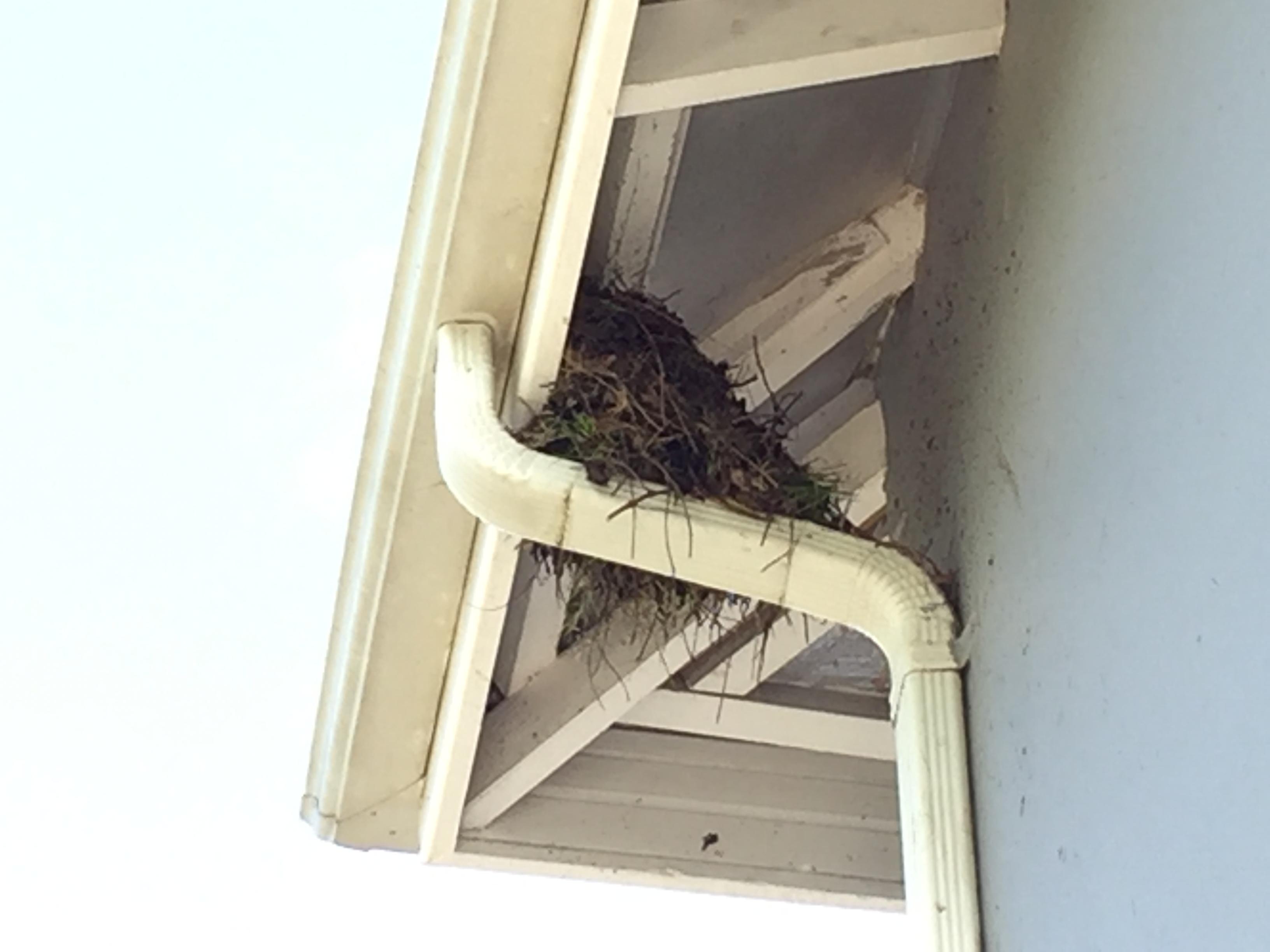 starling-nest