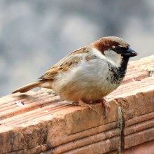 The Problem With Sparrows