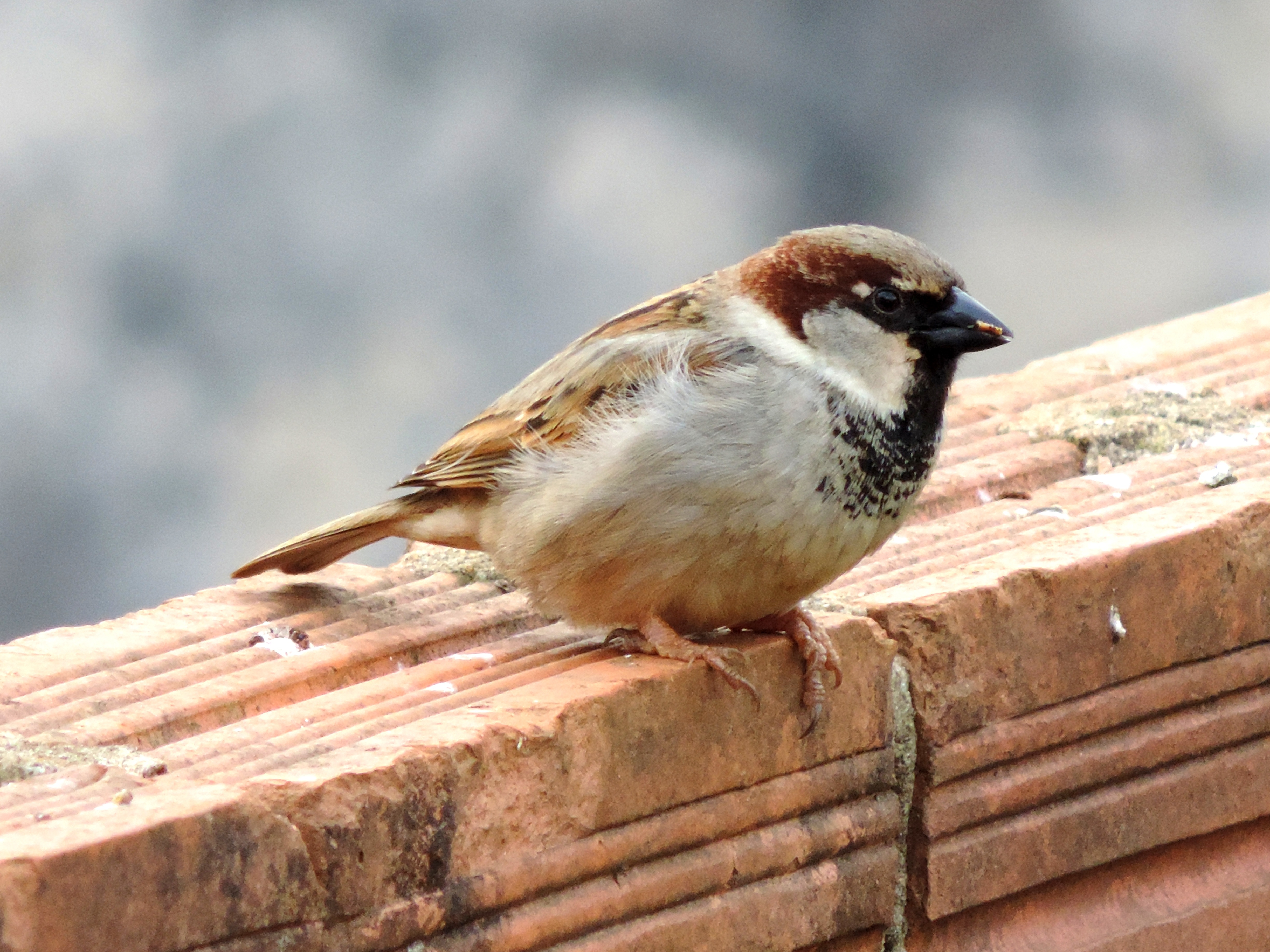 The Problem With Sparrows Bird Deterrent Specialists